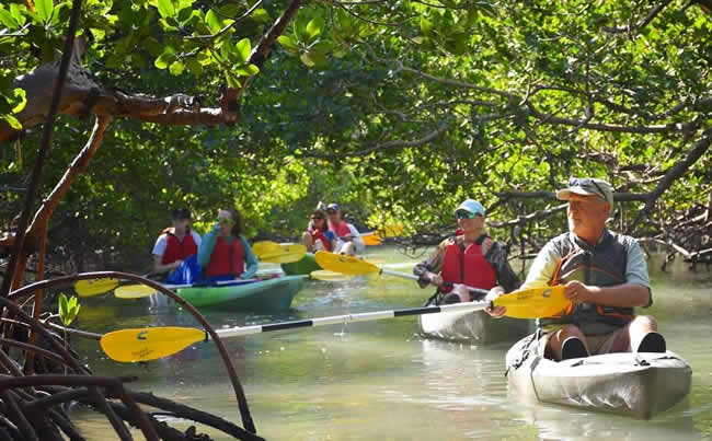 Kayakers paddling through mangrove tunnel