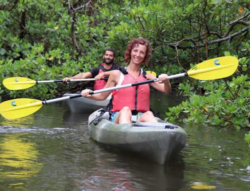 The Best Kayaking in Naples and Marco Island, Florida