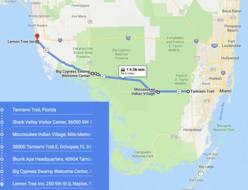 Take a Scenic Drive on the Tamiami Trail between Naples and Miami